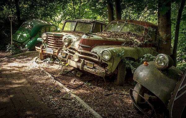 Autos im Wald.