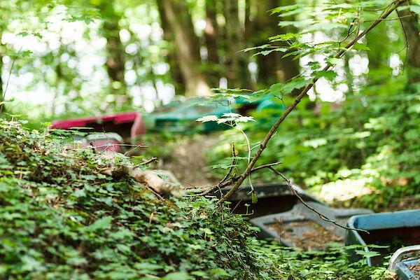 Autoscooter im Wald.