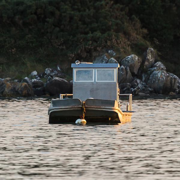 Austernboot