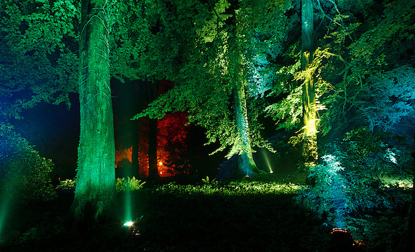 Geheimnisvoller Wald II