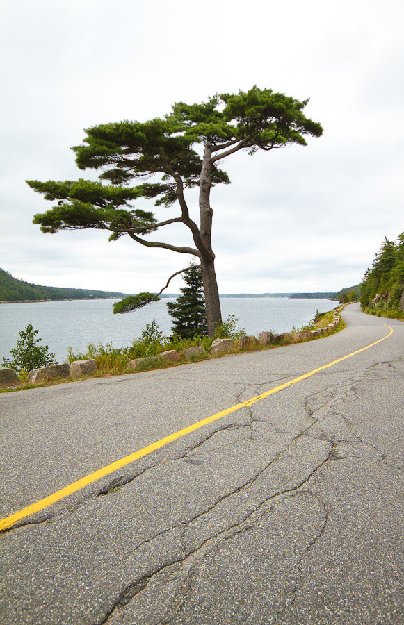 Sargeant Drive, Somes Sound, Acadia National Park