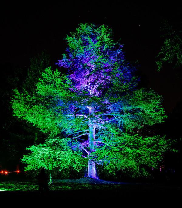 """Der große Baum; """"Poesie des Lichts"""""""