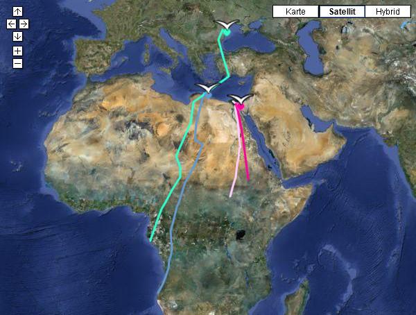 Vogelflugrouten, Piret (rosa) auf birdmap.5dvision.ee