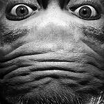 So einfach macht man ein Alien-Selfie