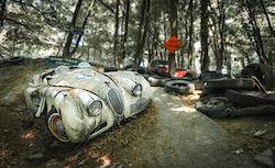 Jaguar in der Steilkurve
