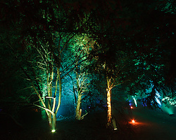 Grüner Wald I