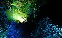 Geheimnisvoller Wald I