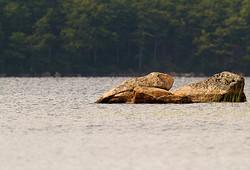Kleine Felsen im See
