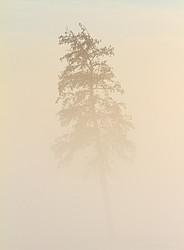 Baumkrone im Nebel